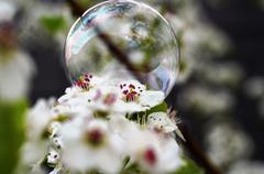 Bubble on a pretty white garden flower - stock photo