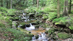 Beautiful magical mountain brook with a mossy rocks in the forest - stock footage