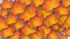Leaves Transition Stock Footage