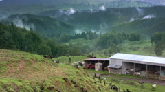 New Zealand rural landscape. Mist rises from farm land and forest. Stock Footage