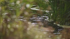 A quiet place in the woods near the pond Stock Footage
