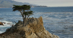 4K Lone Cypress 03 Sunset Ocean 17 Miles Drive Monterey California Stock Footage