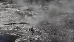 Geothermal mud pool, Rotorua, New Zealand. Stock Footage
