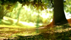 Loop of Oak tree nature background. Sunlight and trees in a forest or park. - stock footage
