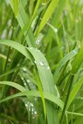 Raindrops on the grass Stock Photos