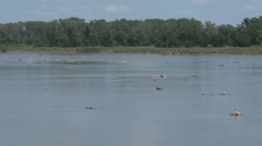 Woody Debris and Logs on the Missouri River in Great Plains Stock Footage