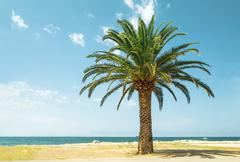 Stock Photo of palm tree on the beach.