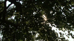 Sun in the leaves of the trees Stock Footage