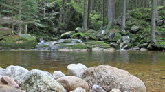 Magical, wild forest. Karkonosze National Park UNESCO biosphere reserve Stock Footage