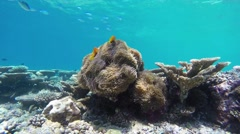 Maldive anemonefishes at the atoll reef in Maldives - stock footage