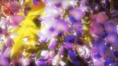 Purple wisteria flowers - a colorful romantic feminine floral background. - stock footage