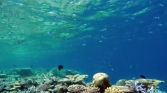 Barrier Reef at Indopacific with unterwater marine fauna and corals by diving Stock Footage