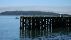 Oregon Tillamook Bay gulls sitting on pier 4k Stock Footage