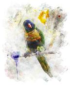 Watercolor image of parrot (rainbow lorikeet) Piirros