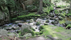 Beautiful mountain brook with a mossy rocks in the forest Stock Footage