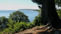 Oregon Tillamook Bay tree frames water 4k Stock Footage