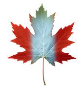 canada maple leaf - stock illustration