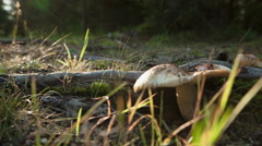 Morning sunlight and wild mushrooms Stock Footage