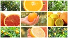 Citrus fruits montage Stock Footage