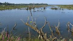 Oregon Columbia River backwater flower on dead tree 4k Stock Footage