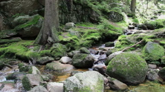 Magical, wild forest with a pure water in a brook. UNESCO biosphere reserve Stock Footage