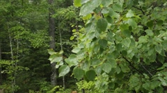 Forest rain shower Stock Footage