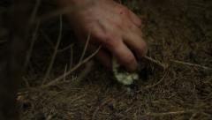 Picking Mushroom in Woods Stock Footage