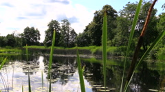 Calm lake covered with lily, view over Calamus on summer day Stock Footage