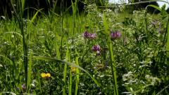 Meadow of flowers - trees in the background - blue sky - sunny - slider Stock Footage