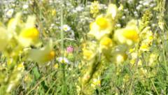 Meadow of flowers - trees in the background - detail of flowers - sunny - slider Stock Footage
