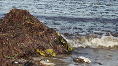 Seaweed at the Baltic Sea in Germany 2 Stock Footage
