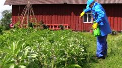 Gardener man fertilize potato and bean plants near farm house Stock Footage