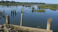 Oregon Columbia River backwater with posts 4k Stock Footage