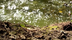 Brook in the forest - detail of running water - sun rays - ground (soil) - slide Stock Footage