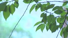 Rain Falling on Leaves Stock Footage