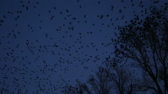 Bird in the dark - stock footage