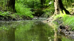 Brook in the forest (trees, bushs, grass) - small flys fly above the brook - sun Stock Footage