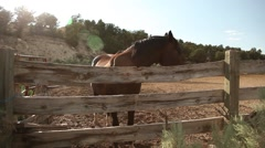 Horse and fence wide Stock Footage