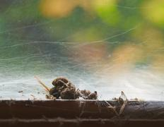 Dead hornet in a spider web Stock Photos