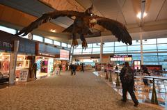 Wellington international airport  - new zealand Kuvituskuvat