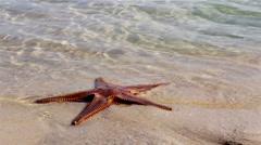 Algarve - Ria Formosa Armona Island Starfish F2 Stock Footage