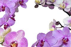Copyspace outlined by a variety of pink phalaenopsis orchids Stock Photos