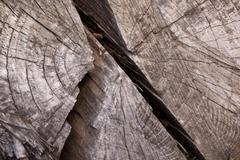 cracks due to weathering on tamboti log - stock photo