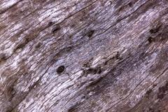 Grain and texture on weathered tamboti log Stock Photos