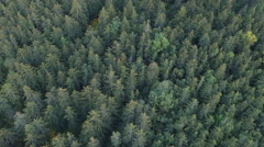 Aerial Flying over Treetops in Alaskan Forest High Angle Stock Footage