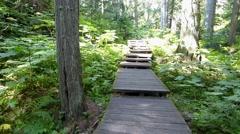 Walking Along a Forest Park Boardwalk - stock footage