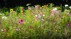 Colorful wildflowers in summer Stock Footage