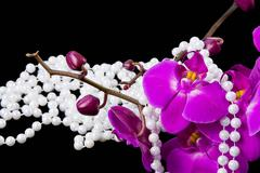 flowers of pink  orchid and beads from white pearls on a  black  background - stock photo