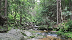Stream of water in the wild forest. UNESCO biosphere reserve. Stock Footage