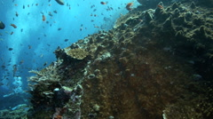 Scuba divers exploring coral reef alive with fish - stock footage